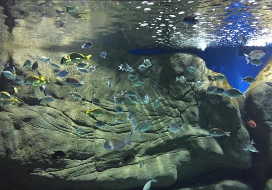 aquario_15