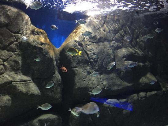 aquario_16