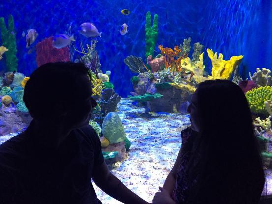 aquario_19