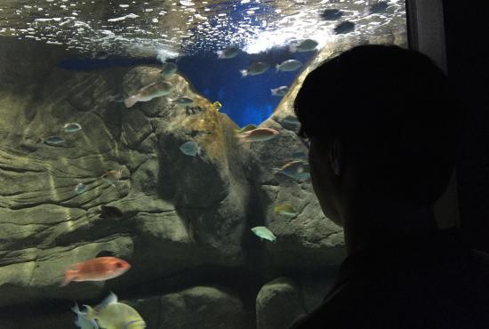 aquario_20