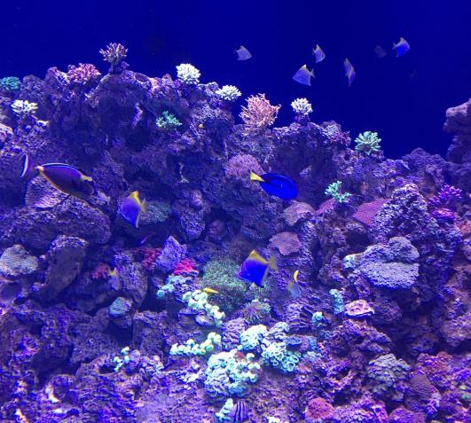 aquario_22