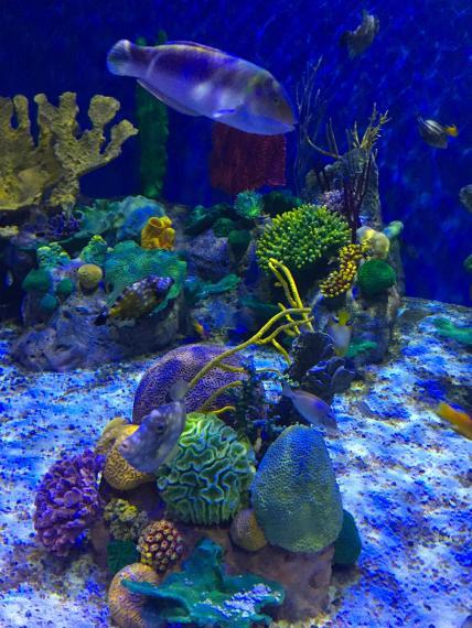 aquario_25