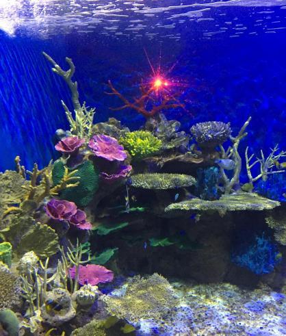 aquario_27