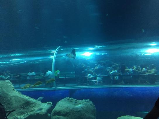 aquario_29