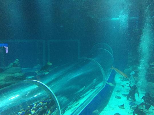 aquario_30