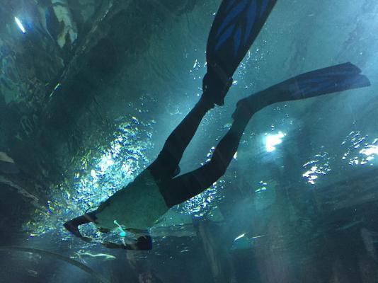 aquario_32