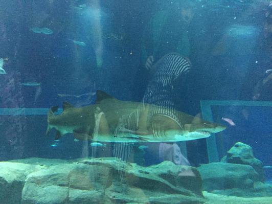 aquario_33