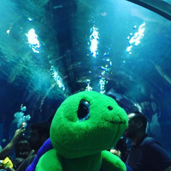 aquario_36
