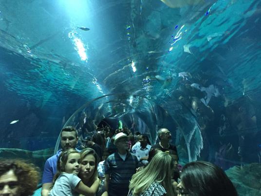 aquario_39