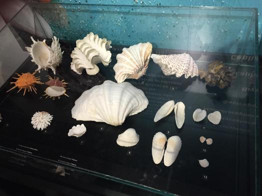 aquario_41
