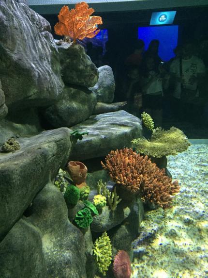 aquario_9
